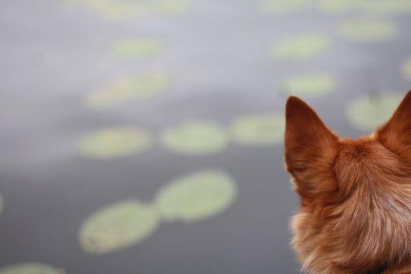 Красивые картинки собак и собачек - смотреть бесплатно, очень крутые 9