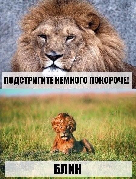 Смешные картинки про животных с надписями новые 19