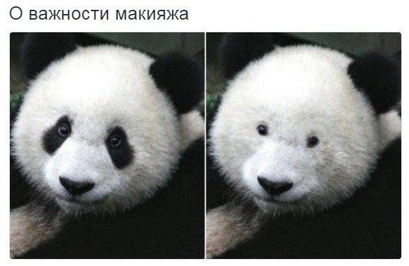 Смешные картинки про животных и зверей с надписями - подборка 9
