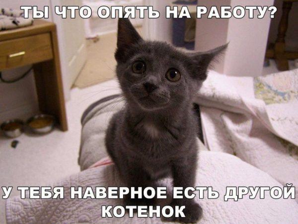 Смешные картинки про котов и котиков - смотреть подборку бесплатно 1