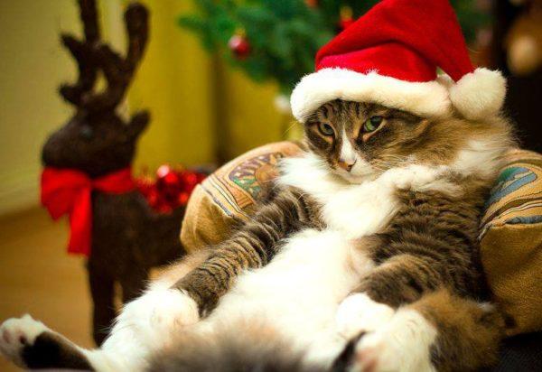 Смешные картинки про котов и котиков - смотреть подборку бесплатно 10