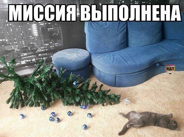 Смешные картинки про котов и котиков - смотреть подборку бесплатно 11