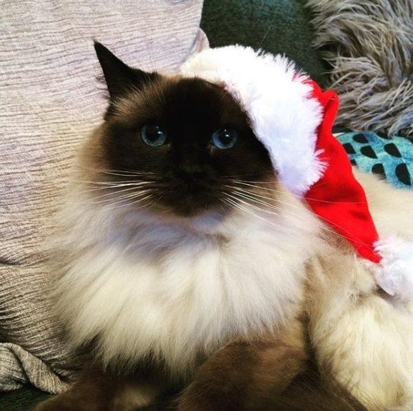 Смешные картинки про котов и котиков - смотреть подборку бесплатно 13