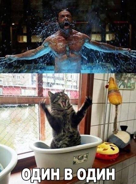 Смешные картинки с котами и кошками и с надписями до слез