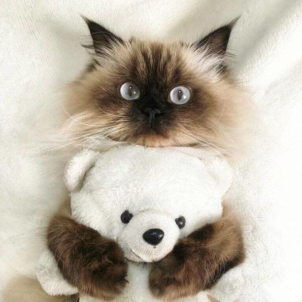 Смешные картинки про котов и котиков - смотреть подборку бесплатно 3