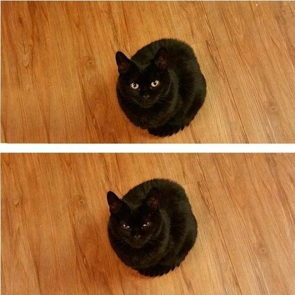 Смешные картинки про котов и котиков - смотреть подборку бесплатно 4