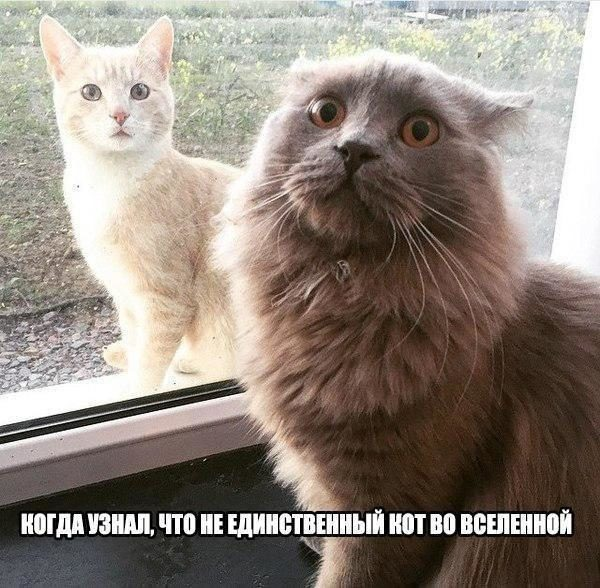 Смешные картинки про котов и котиков - смотреть подборку бесплатно 5