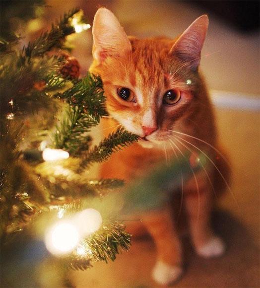 Смешные картинки про котов и котиков - смотреть подборку бесплатно 6