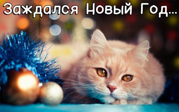 Смешные картинки про котов и котиков - смотреть подборку бесплатно 7