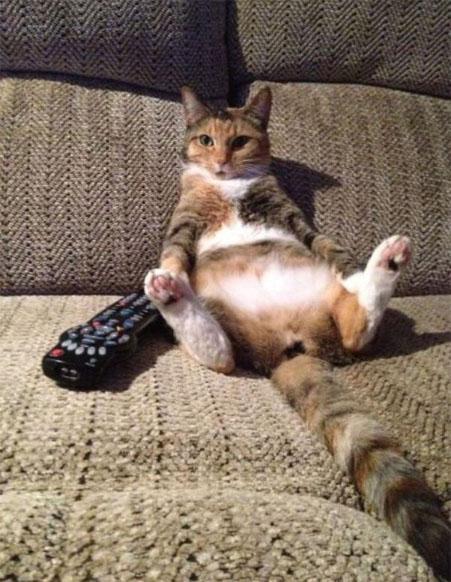 Смешные картинки про котов и котиков - смотреть подборку бесплатно 8