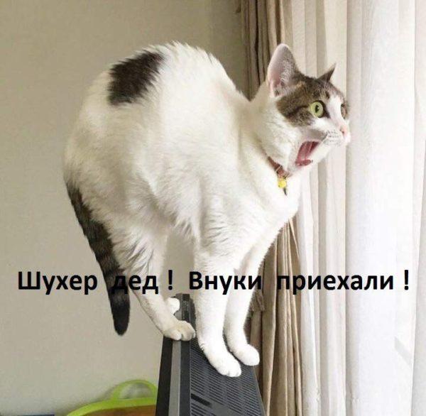 Смешные картинки про котов и котиков - смотреть подборку бесплатно 9