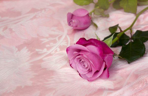 Красивые и прикольные картинки роз - удивительная подборка 6