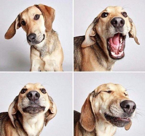 Прикольные и смешные картинки про собачек - смотреть коллекцию 1