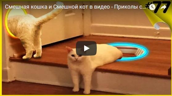 Смешные видео приколы про котов - самые лучшие и ржачные за 2018