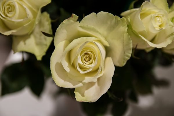 Красивые и прикольные картинки роз - удивительная подборка 15