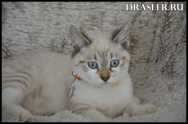 Как правильно ухаживать за котенком - главные рекомендации 1