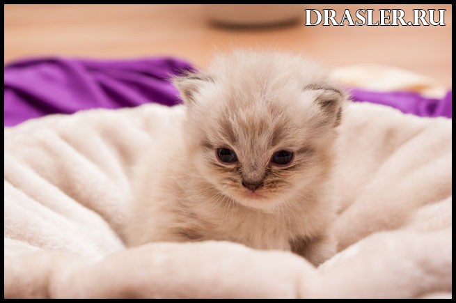 Как правильно ухаживать за котенком - главные рекомендации 2