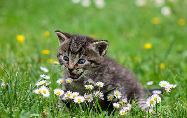 Красивые и прикольные картинки животных - самые удивительные 1