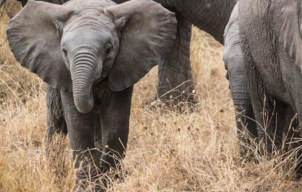 Красивые и прикольные картинки животных - самые удивительные 2