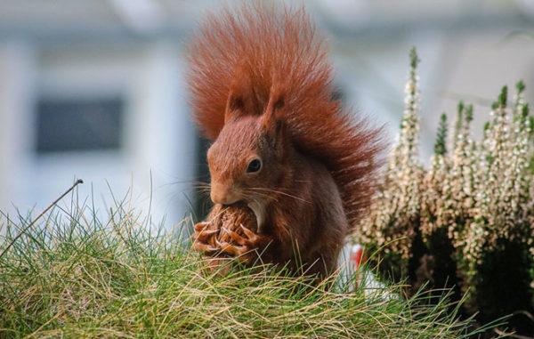 Красивые и прикольные картинки животных - самые удивительные 5