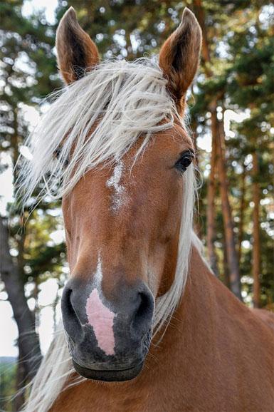 Красивые и прикольные картинки животных - самые удивительные 6