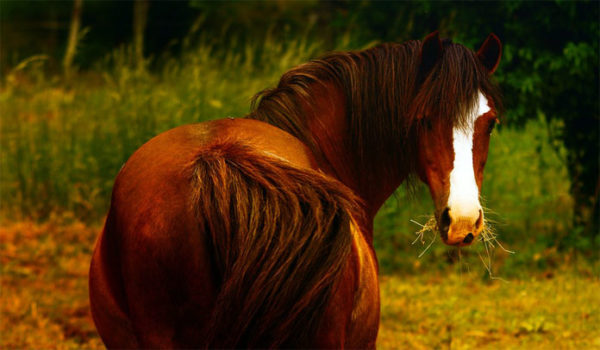 Красивые и прикольные картинки животных - самые удивительные 7