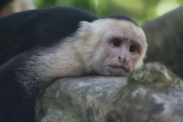 Красивые и прикольные картинки животных - самые удивительные 8