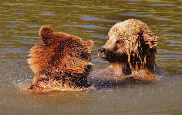 Красивые и прикольные картинки животных - самые удивительные 9