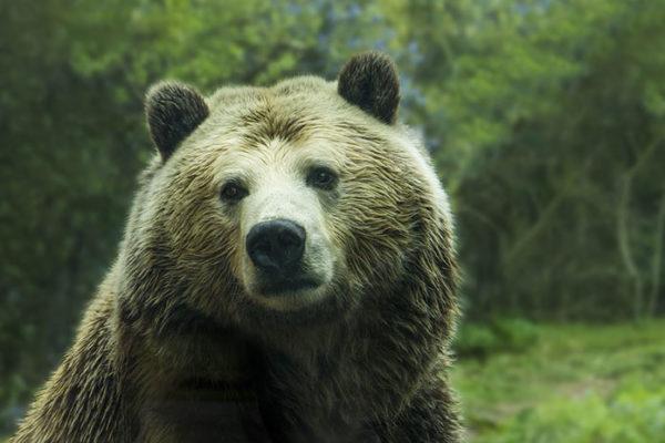 Удивительные и красивые картинки, фото животных - лучшая коллекция 1