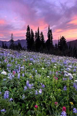 Весна картинки на телефон скачать бесплатно - самые крутые и красивые 4