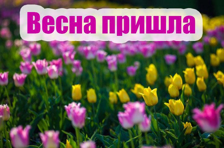 Весна пришла картинки с надписями - самые красивые и прикольные 11