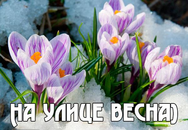 Весна пришла картинки с надписями - самые красивые и прикольные 3