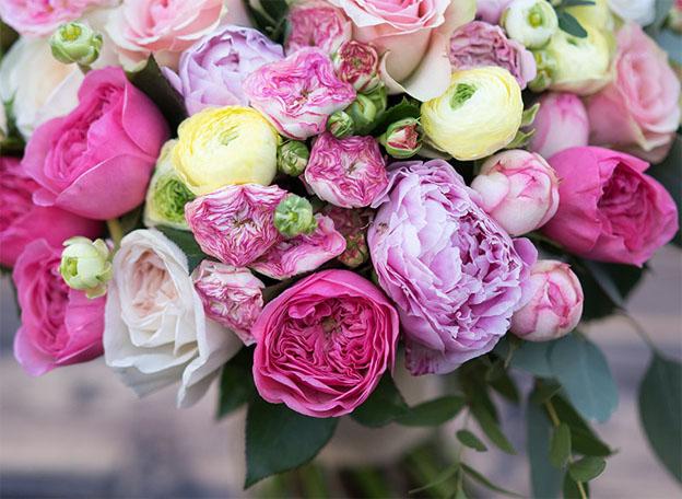 Картинки цветы пионы красивые и интересные - лучшая коллекция 12