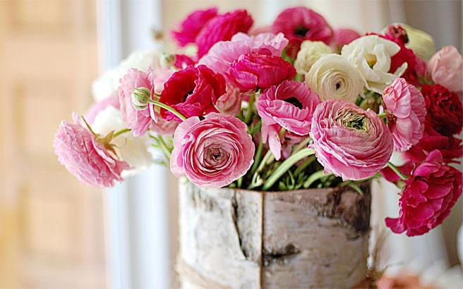 Картинки цветы пионы красивые и интересные - лучшая коллекция 14