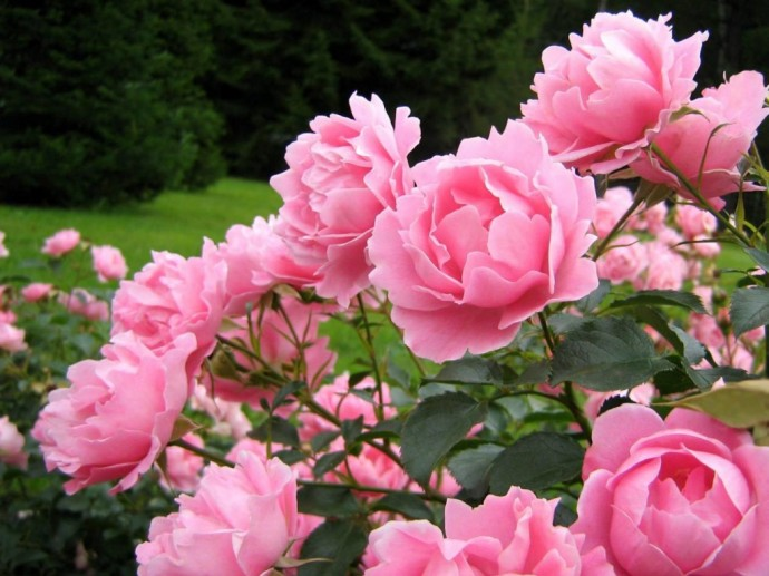 Картинки цветы пионы красивые и интересные - лучшая коллекция 2