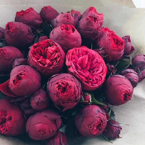 Картинки цветы пионы красивые и интересные - лучшая коллекция 8