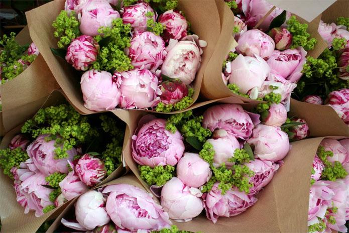Картинки цветы пионы красивые и интересные - лучшая коллекция 9