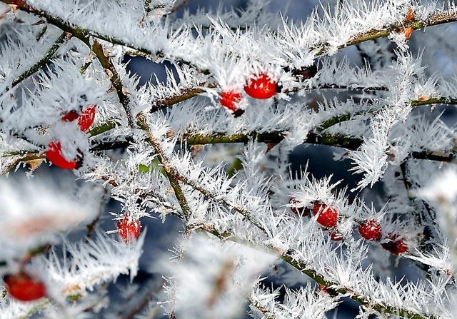 Красивые-зимние-картинки-природы-и-растений---лучшие-изображения-1