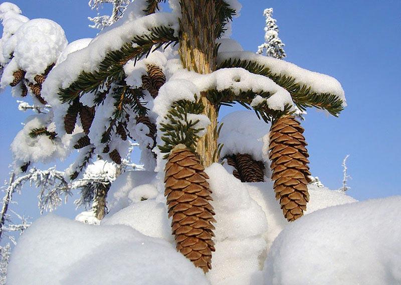 Красивые-зимние-картинки-природы-и-растений---лучшие-изображения-10.jpg!