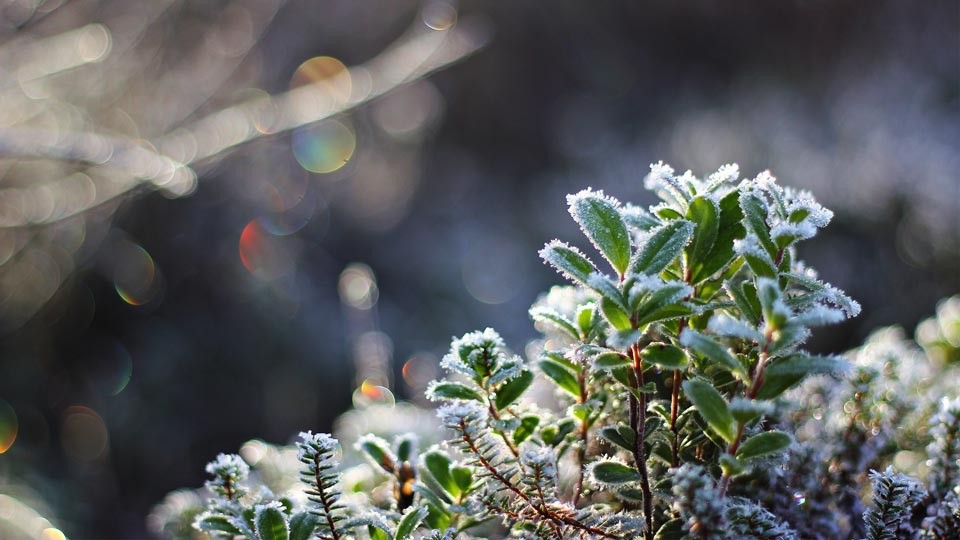 Красивые-зимние-картинки-природы-и-растений---лучшие-изображения-11