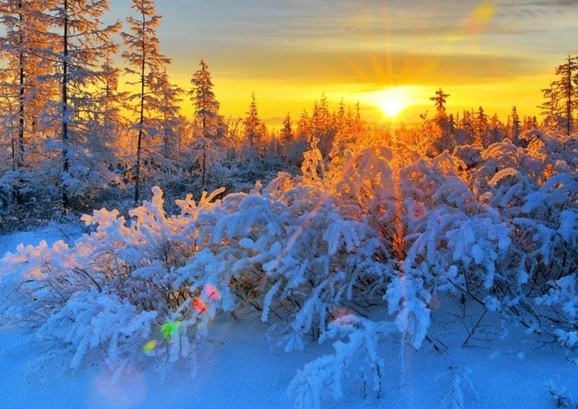 Красивые-зимние-картинки-природы-и-растений---лучшие-изображения-14