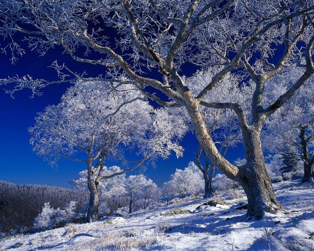 Красивые-зимние-картинки-природы-и-растений---лучшие-изображения-15