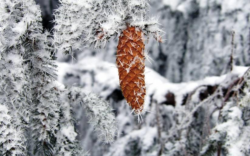 Красивые-зимние-картинки-природы-и-растений---лучшие-изображения-2