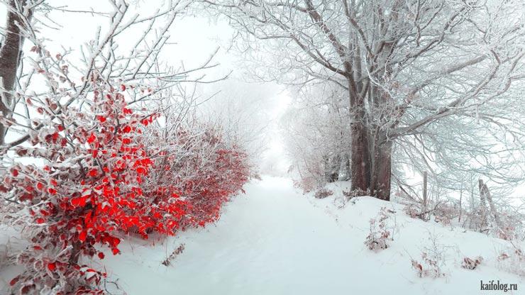 Красивые-зимние-картинки-природы-и-растений---лучшие-изображения-3