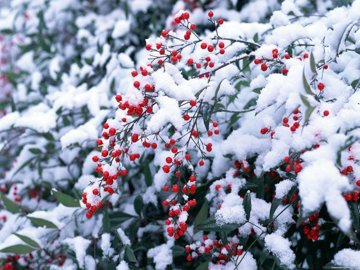 Красивые-зимние-картинки-природы-и-растений---лучшие-изображения-4
