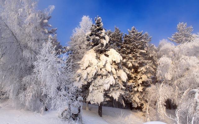 Красивые-зимние-картинки-природы-и-растений---лучшие-изображения-5