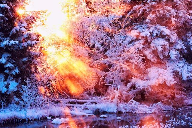 Красивые-зимние-картинки-природы-и-растений---лучшие-изображения-6