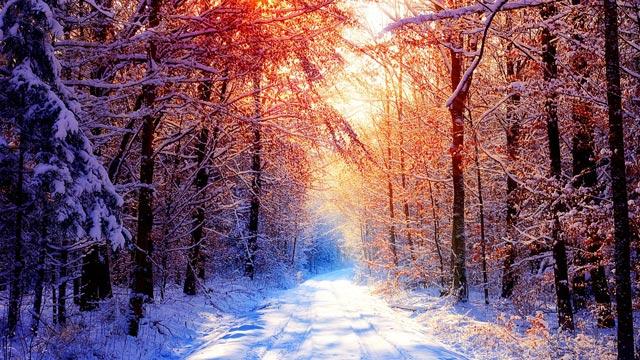 Красивые-зимние-картинки-природы-и-растений---лучшие-изображения-8