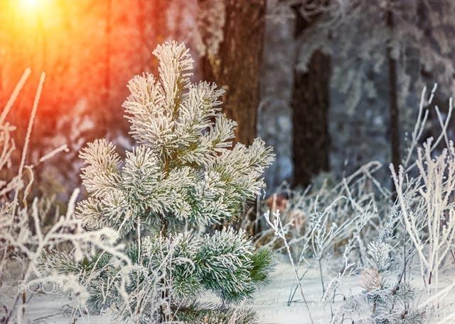 Красивые-зимние-картинки-природы-и-растений---лучшие-изображения-9