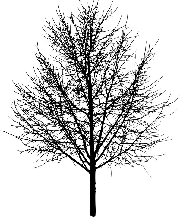 Красивые картинки дерево без листьев - скачать бесплатно для детей 10